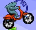 Shark Moto
